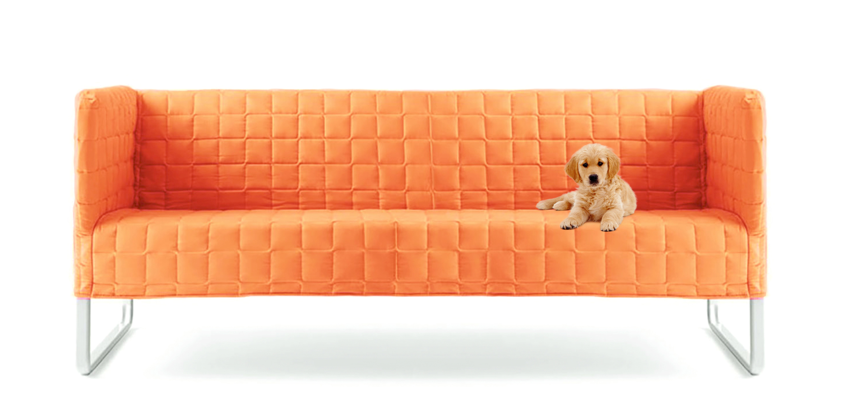 Orange couch with dogs